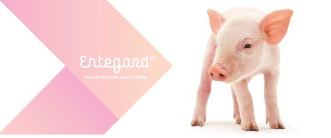 entegard-mfeed